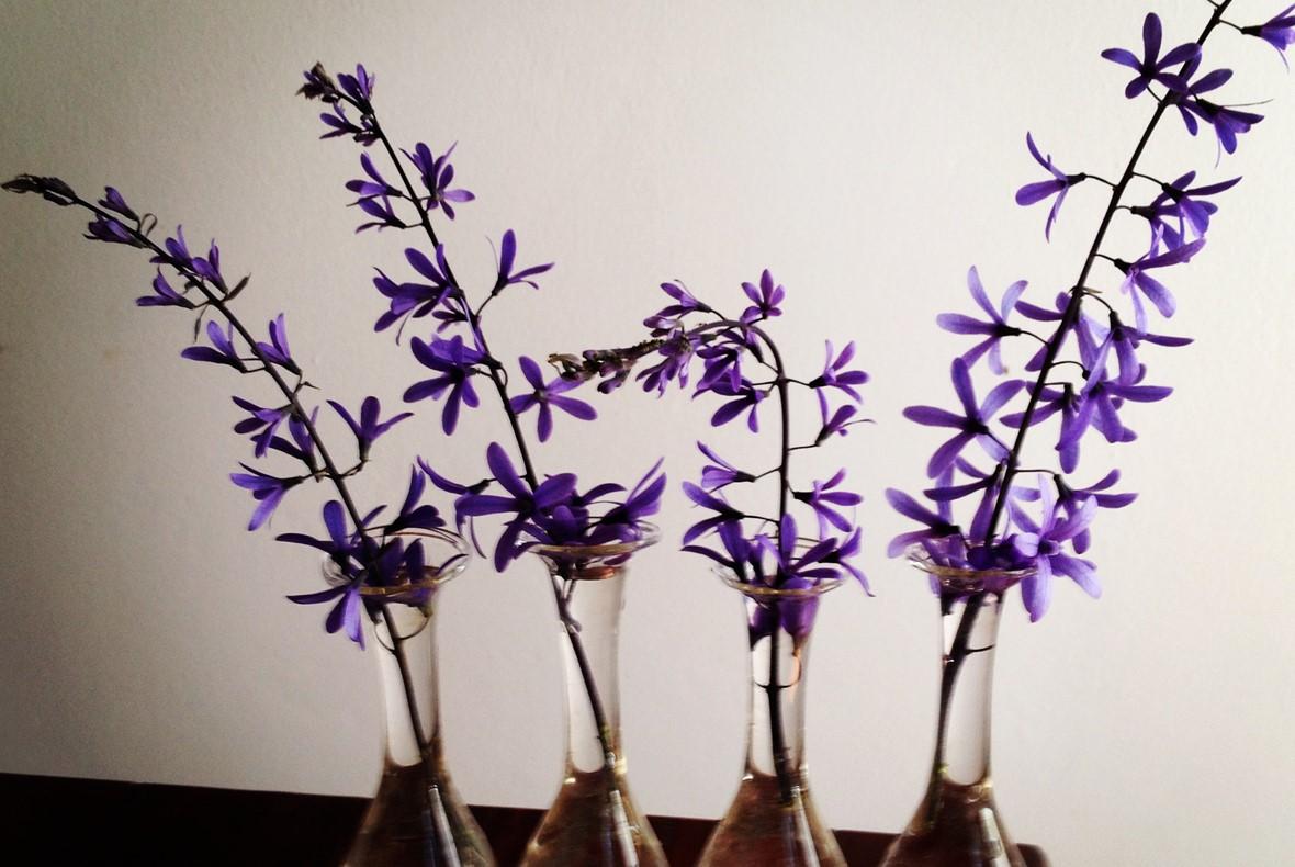 Vas med blå blommor - skrik